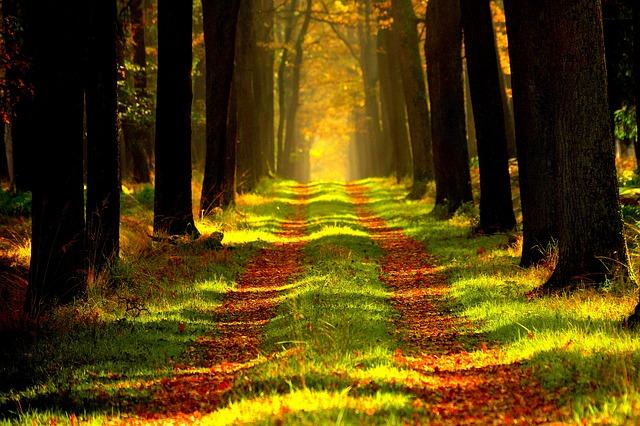cesta v lesním porostu